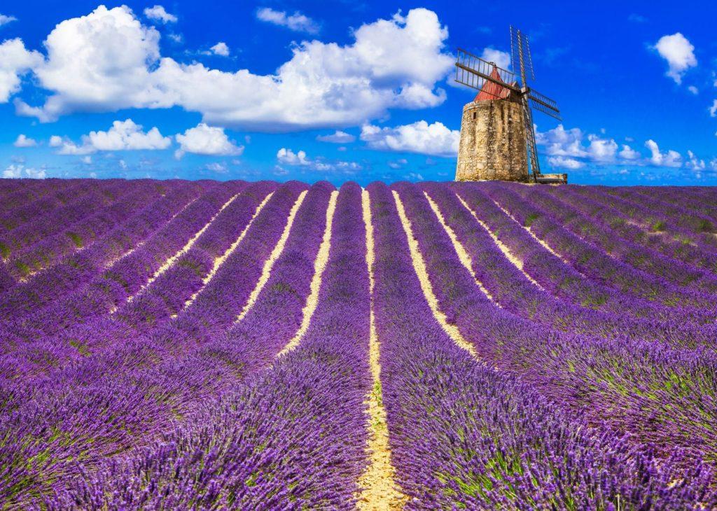 beaux champs de lavande avec un moulin à vent