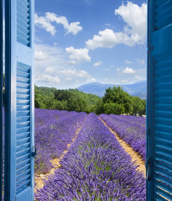 Lavender field with summer blue sky through wooden shutters, France