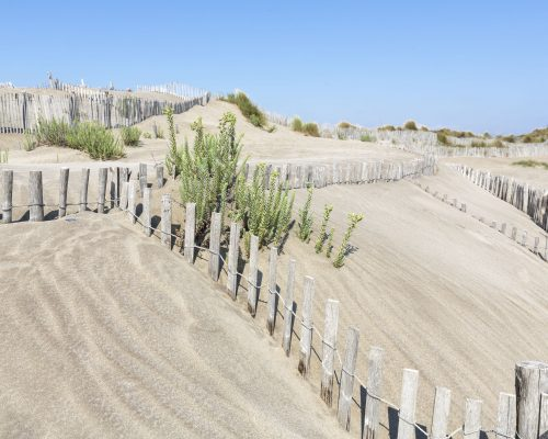 Dune landscape on L'espiguette beach in the Camargue district, Southern France